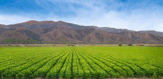 Campos de la cosecha de California Imagen de archivo libre de regalías