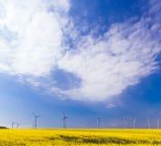Campos de la energía eólica y de la violación Imagen de archivo libre de regalías