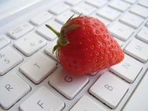 Campos de la fresa para nunca Imágenes de archivo libres de regalías