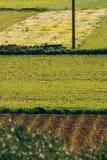 Campos de la hierba, composición linear, en las cercanías de Mellieh Foto de archivo