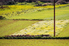 Campos de la hierba, composición linear, en las cercanías de Mellieh Fotografía de archivo libre de regalías