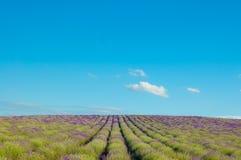 Campos de la lavanda contra el cielo azul foto de archivo libre de regalías