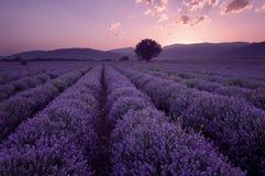Campos de la lavanda Imagen hermosa del campo de la lavanda Paisaje de la puesta del sol del verano, colores que ponen en contras fotos de archivo libres de regalías