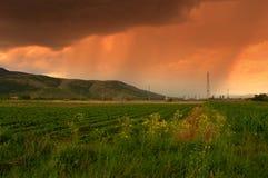 Campos de la lluvia del verano Fotografía de archivo