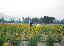 Campos de la maravilla con el jardinero del fondo que usa los pesticidas Imagen de archivo libre de regalías