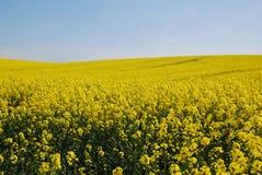 Campos de la primavera Imagenes de archivo
