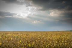 Campos de la soja Foto de archivo