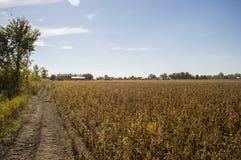 Campos de la soja Imagen de archivo libre de regalías