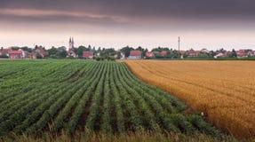 Campos de la soja y de trigo que maduran en la estación de primavera Foto de archivo libre de regalías