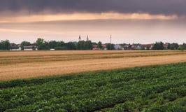 Campos de la soja y de trigo que maduran en la estación de primavera Imágenes de archivo libres de regalías