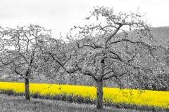 Campos de la violación de semilla oleaginosa Foto de archivo libre de regalías