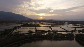 Campos de la visión aérea en la puesta del sol en Vietnam almacen de metraje de vídeo