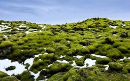 Campos de lava de Eldhraun cobertos com o musgo, Islândia fotografia de stock