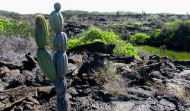 Campos de lava, Punta Moreno, pagos do ¡ de Galà Fotos de Stock