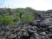 Campos de lava, Punta Moreno, pagos do ¡ de Galà Imagem de Stock