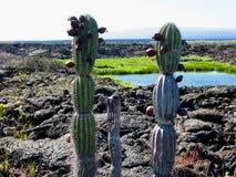 Campos de lava, Punta Moreno, pagos do ¡ de Galà Fotografia de Stock Royalty Free