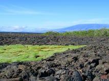 Campos de lava, Punta Moreno, pagos do ¡ de Galà Imagens de Stock