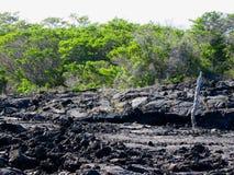 Campos de lava, Punta Moreno, pagos do ¡ de Galà Fotografia de Stock