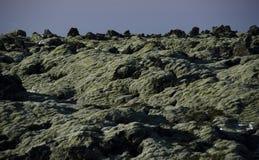 Campos de lava velhos enormes cobertos de vegeta??o com o musgo island?s em uma cor esmeralda ao ar livre fotografia de stock