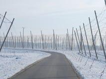 Campos de lúpulo para a cerveja no inverno Fotos de Stock Royalty Free