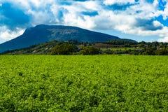 Campos de Lucerna nas montanhas imagem de stock