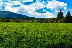 Campos de Lucerna nas montanhas fotos de stock