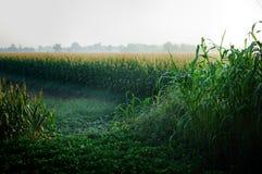 Campos de maíz Fotos de archivo