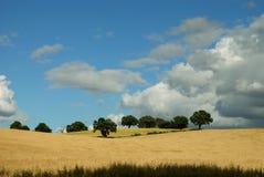 Campos de maíz con las nubes Fotografía de archivo libre de regalías