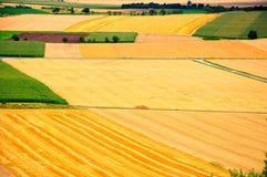 Campos de milho Fotos de Stock Royalty Free