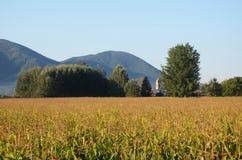 Campos de milho Foto de Stock Royalty Free