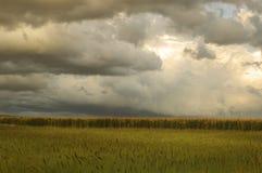 Campos de milho antes do temporal imagens de stock royalty free