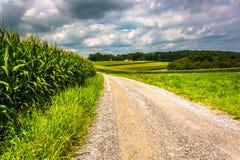 Campos de milho ao longo de uma estrada de terra em Carroll County rural, Maryland fotografia de stock