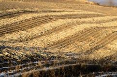 Campos de milho após Harvestry Fotografia de Stock Royalty Free