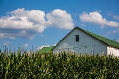 Campos de milho com as explorações agrícolas no fundo Fotos de Stock Royalty Free