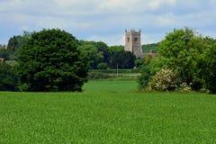 Campos de milho & igreja, Shotesham, Norfolk, Inglaterra em junho imagem de stock royalty free