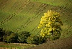 Campos de Moravian Fotografia de Stock Royalty Free