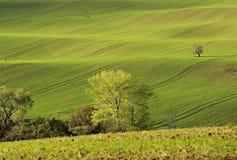 Campos de Moravian Fotos de Stock