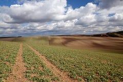 Campos de Moravian imagem de stock