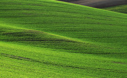 Campos de Moravian Fotos de Stock Royalty Free