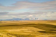 Campos de oro con las montañas Imagen de archivo libre de regalías