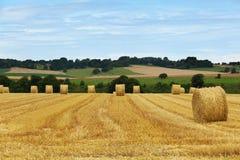Campos de oro en Normandía, Francia imagen de archivo libre de regalías
