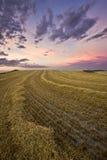 Campos de oro en una puesta del sol del verano Fotografía de archivo