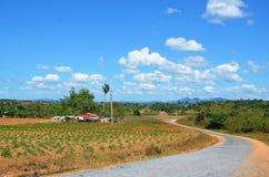 Campos de tabaco alrededor de Puerto Esperanza, Cuba Imagen de archivo