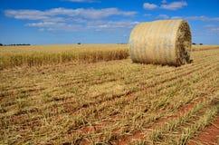 Campos de trigo Fotografia de Stock Royalty Free