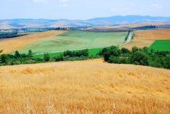 Campos de trigo foto de stock
