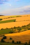 Campos de trigo Foto de archivo libre de regalías
