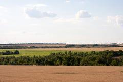 Campos de trigo Imagen de archivo