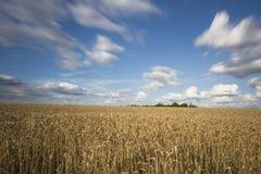 Campos de trigo Imagens de Stock