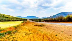 Campos de trigo amarillos y hombros anaranjados de la arcilla a lo largo de la carretera R36 cerca de la ciudad de Orighstad Fotografía de archivo libre de regalías