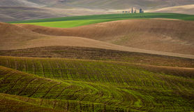 Campos de trigo arados durante a colheita do outono Fotografia de Stock Royalty Free